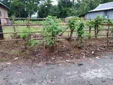 tanah kosong siap bangun 8,5x50 desa benteng gajah