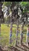 tanah kebun berisi pohon kelapa